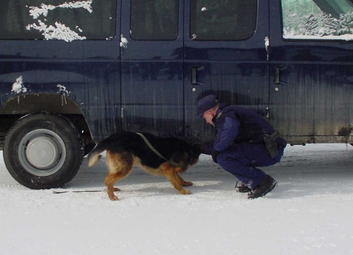 A drug dog searches for fentanyl under a vehicle with the aid of the dog handler. The pooches trained at the RCMP police dog training centre in Innisfail, Albert are first trained to sniff out a liquid form of the substance before they exposed to the powder form. Once they complete their training they are able to track trace amounts of the deadly drug.