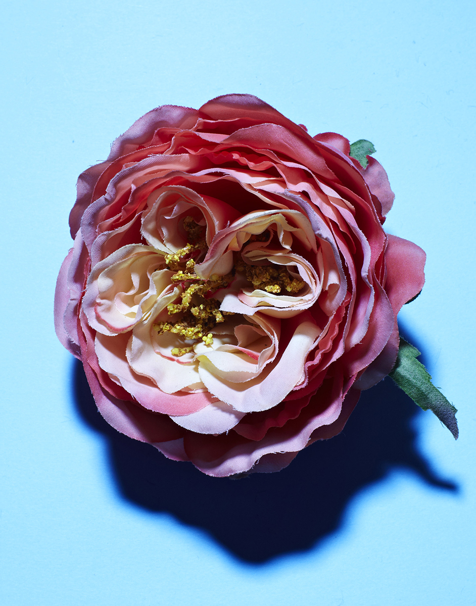 P_141027_FLOWERS_SMALL.jpg
