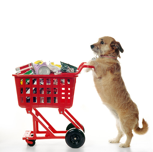 DOGS LOVE TO GO SHOPPING!  THIS IS A DOG  Wow.