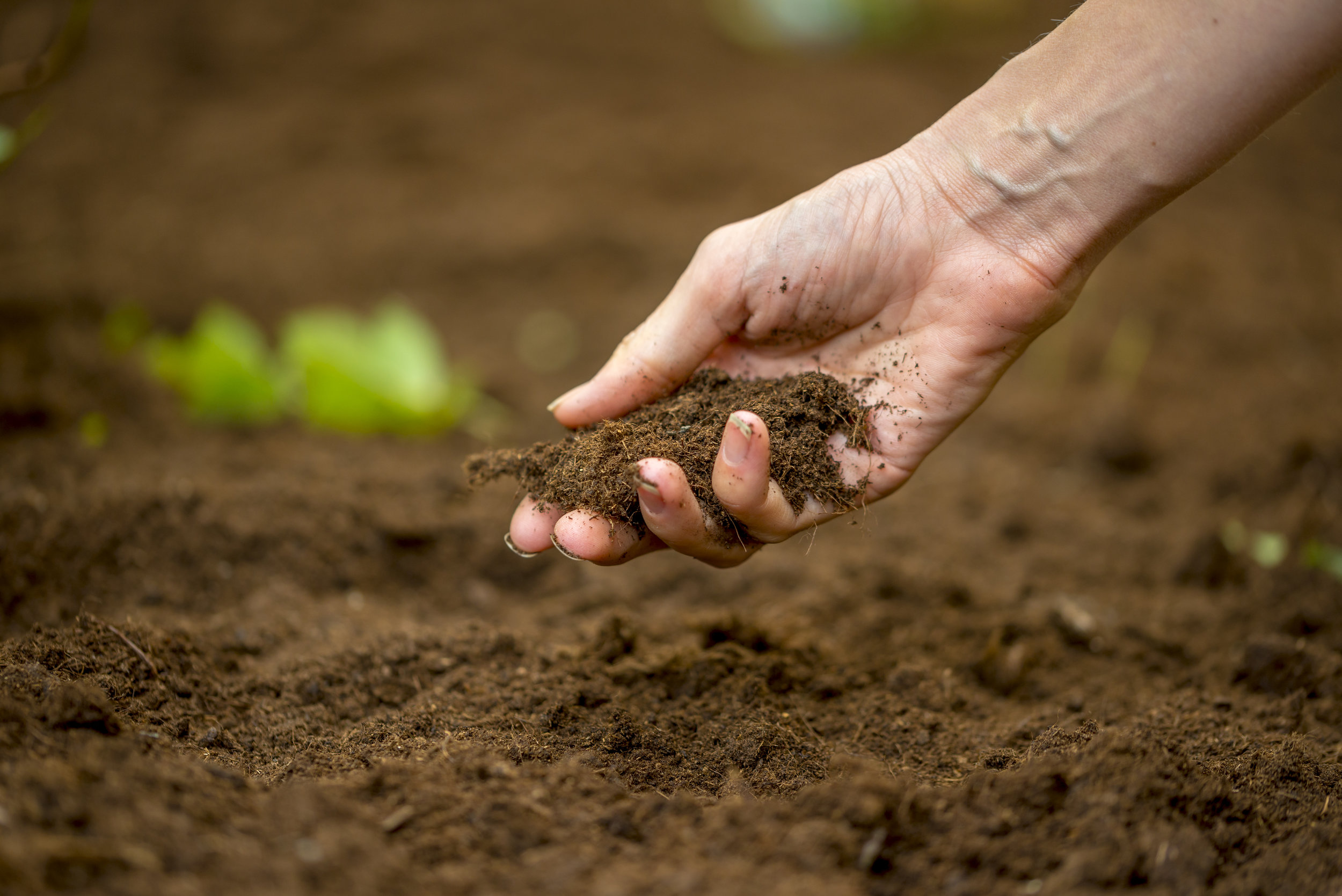 Woman holding fertile rich soil.jpg