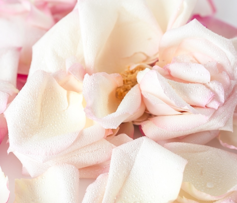 What is the Rose Grace Collection? - The Rose Grace Collection is a luxury, handcrafted, skin care and lifestyle collection that is Australian owned and made.