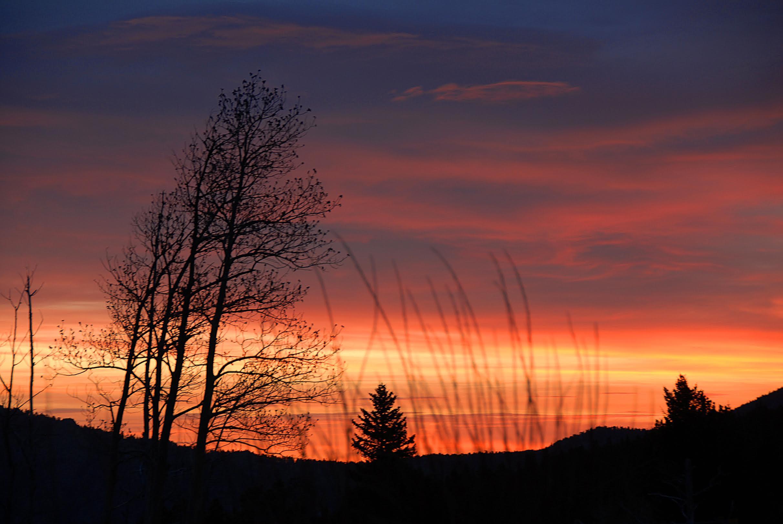 wheat sunset.jpg
