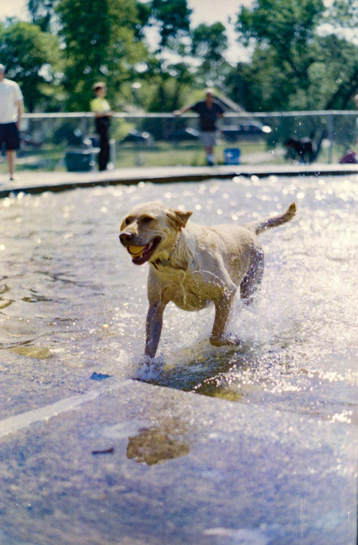 Doggy Day at Happyland wading pool