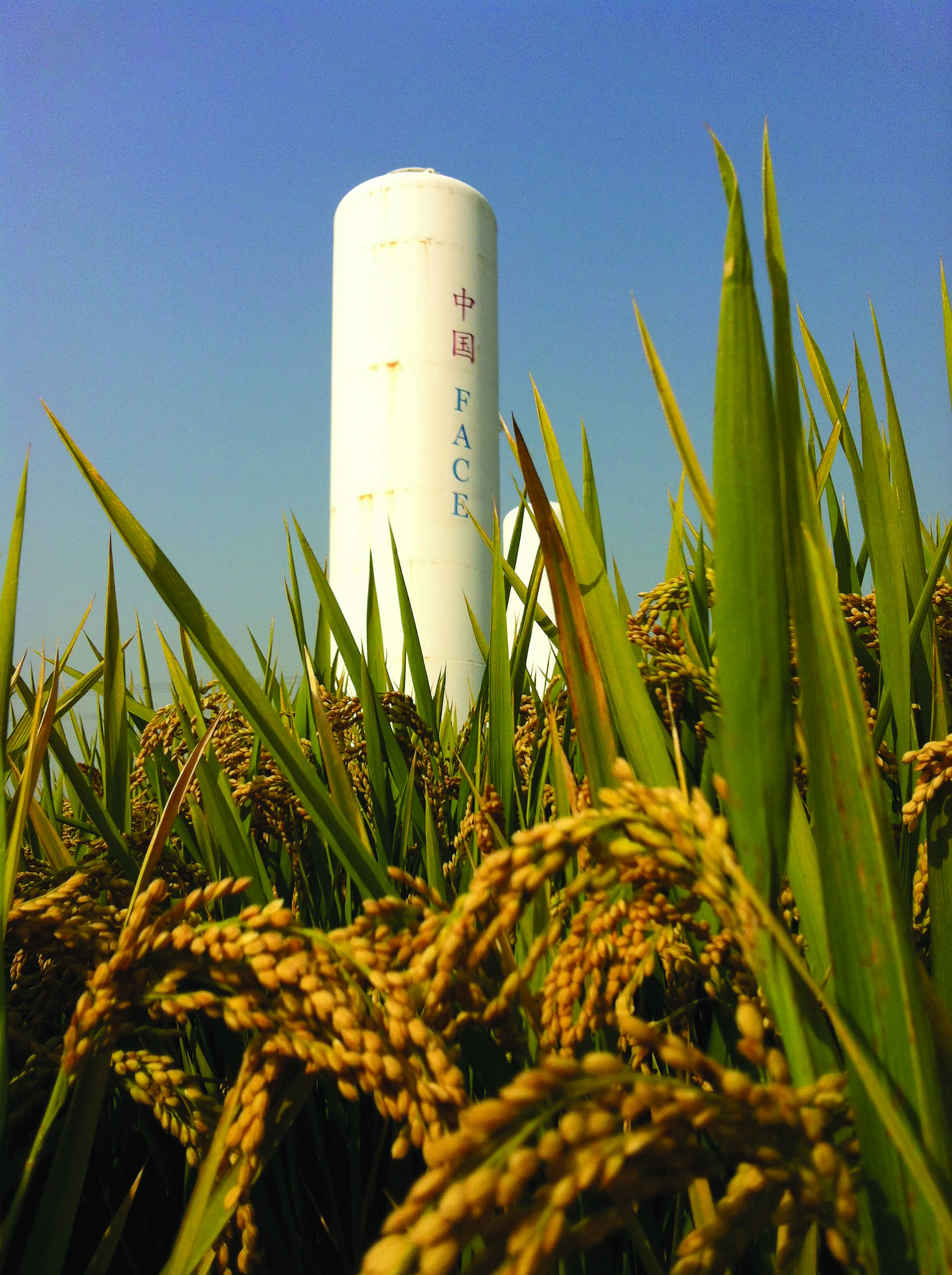 Enormous tanks of carbon dioxide distribute carbon dioxide gas to rice and wheat crops as part of a global warming research project by China's Nanjing University and UTEP Chair of the Department of Chemistry Jorge Gardea-Torresdey, Ph.D. Photo courtesy of Nanjing University