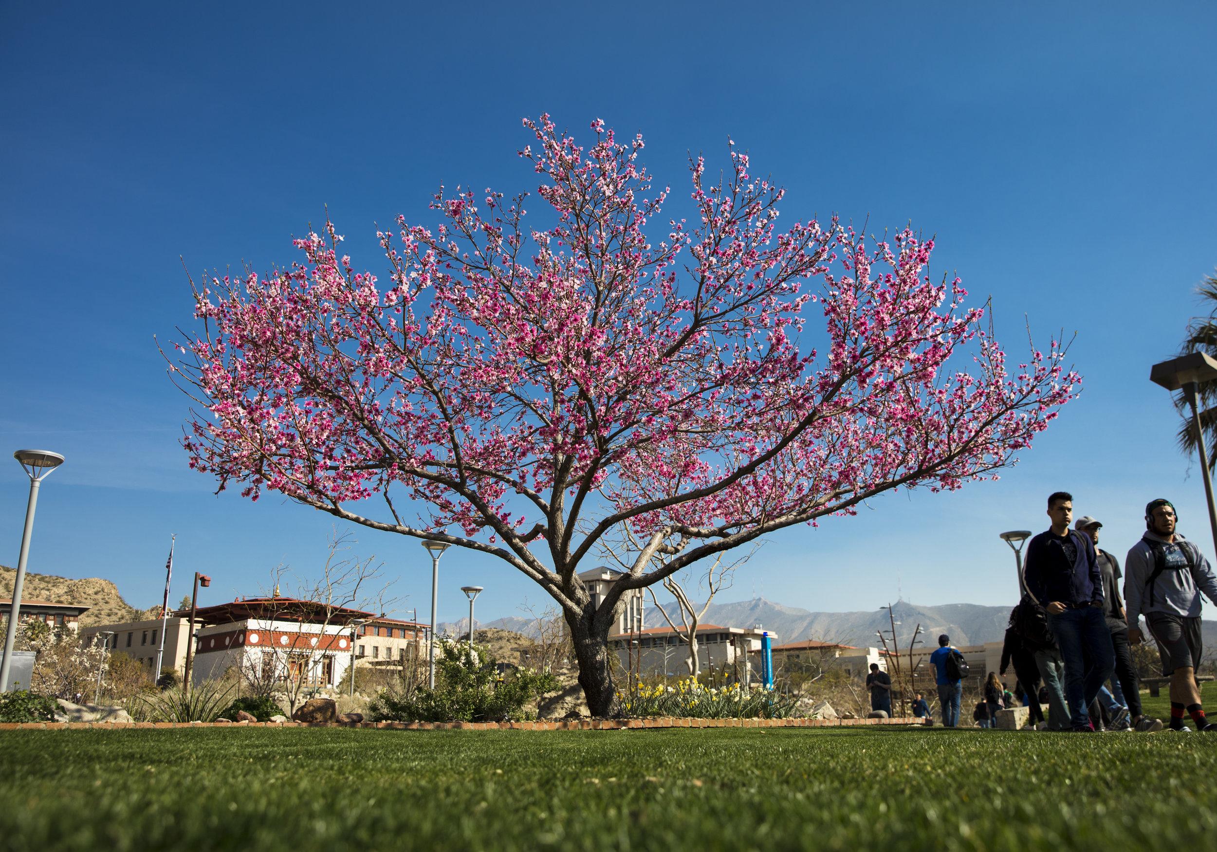 03_08_17 UTEP Campus New Spring Foliage IPA 01.JPG