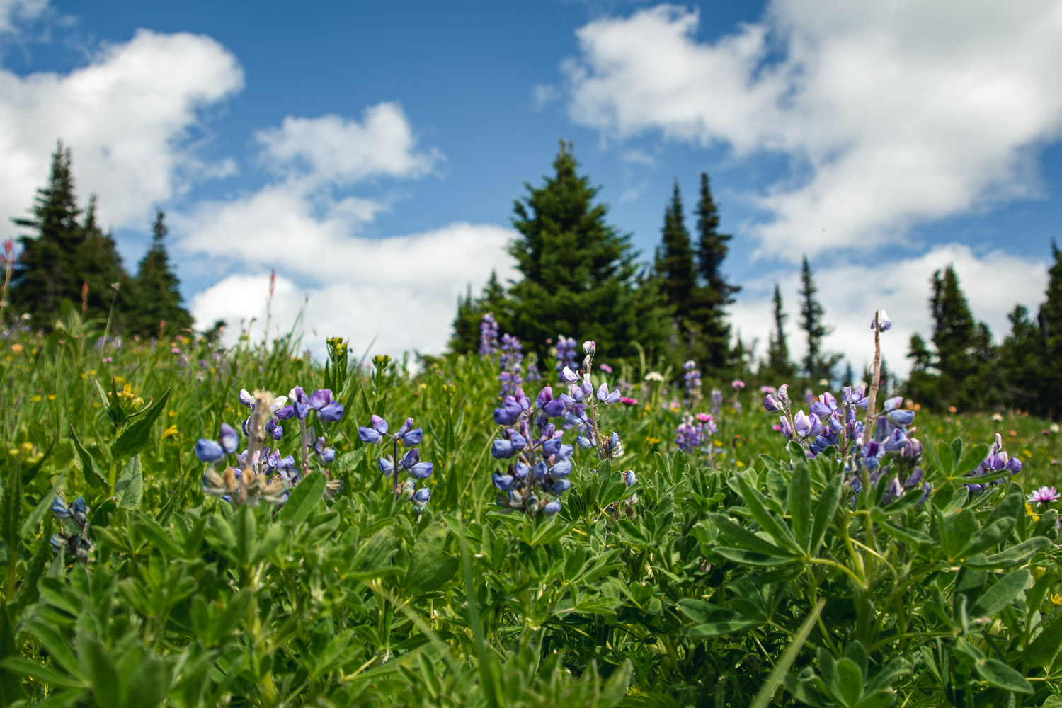wildflowers_crater_lake_hike.jpg