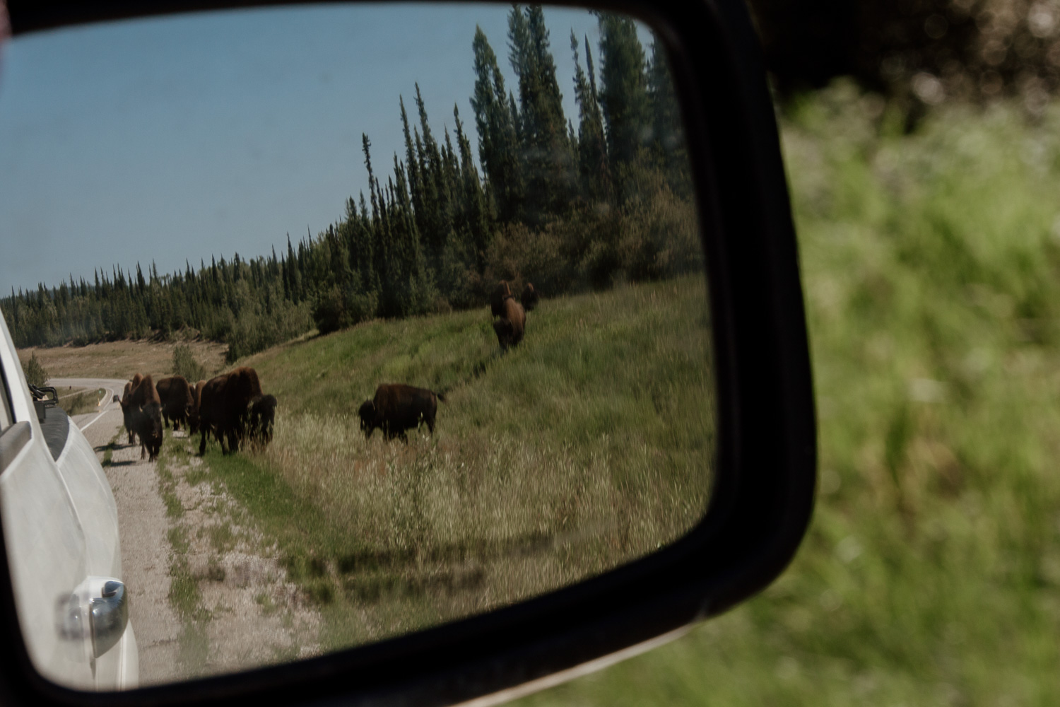 bison-alaska-highway-mirror.jpg