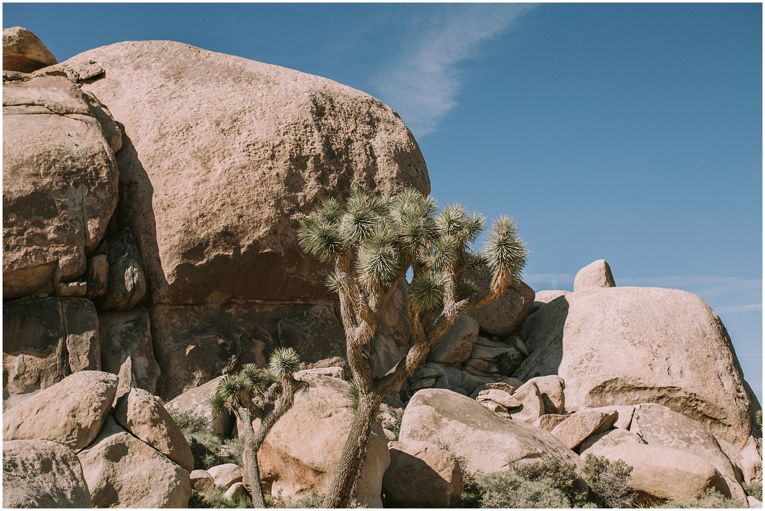 Joshua Tree Engagement Session (1).jpg