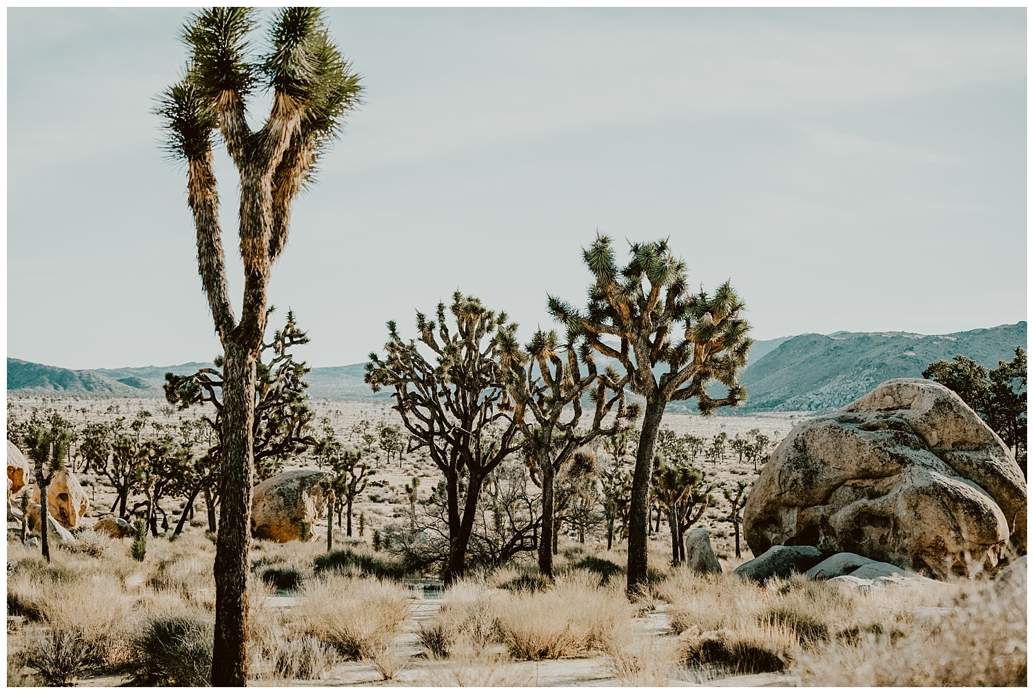 Joshua Tree Park Engagement (9).jpg
