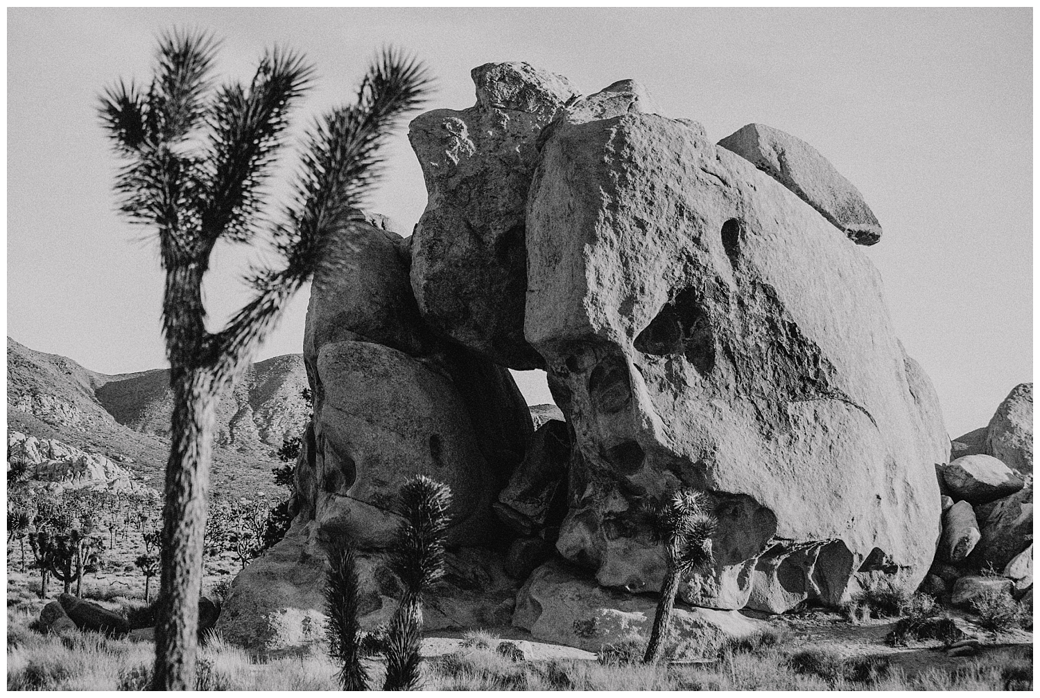 Joshua Tree Park Engagement (11).jpg