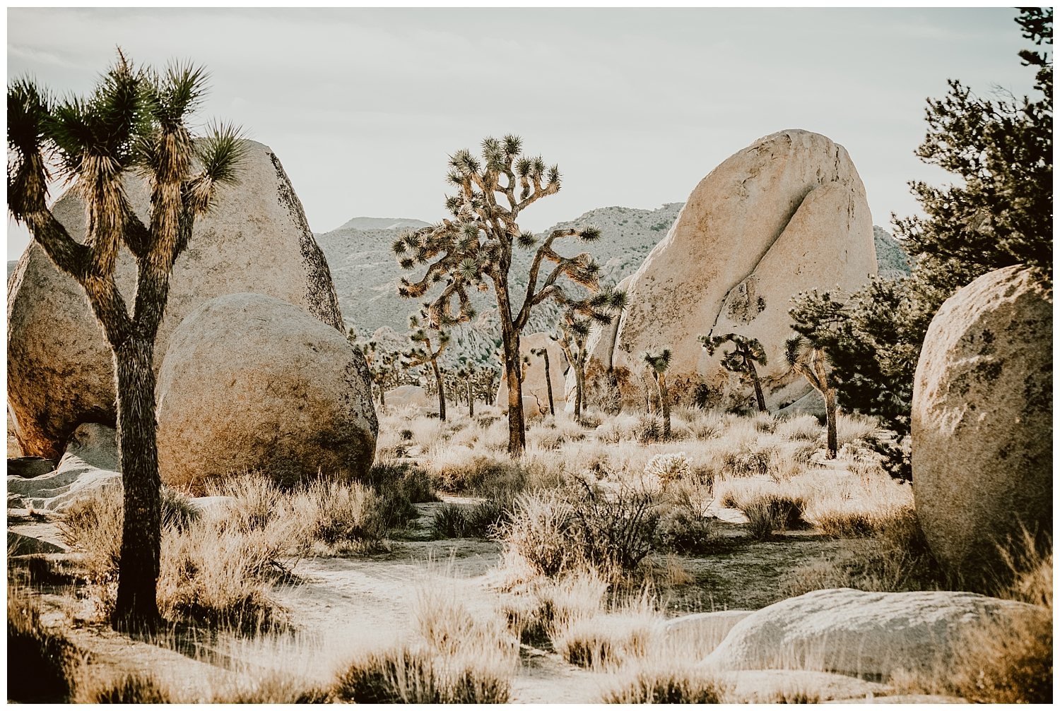Joshua Tree Park Engagement (13).jpg