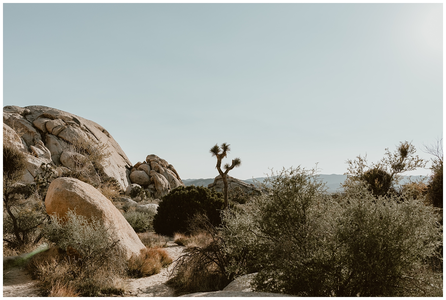 Joshua Tree Engagement (1).jpg