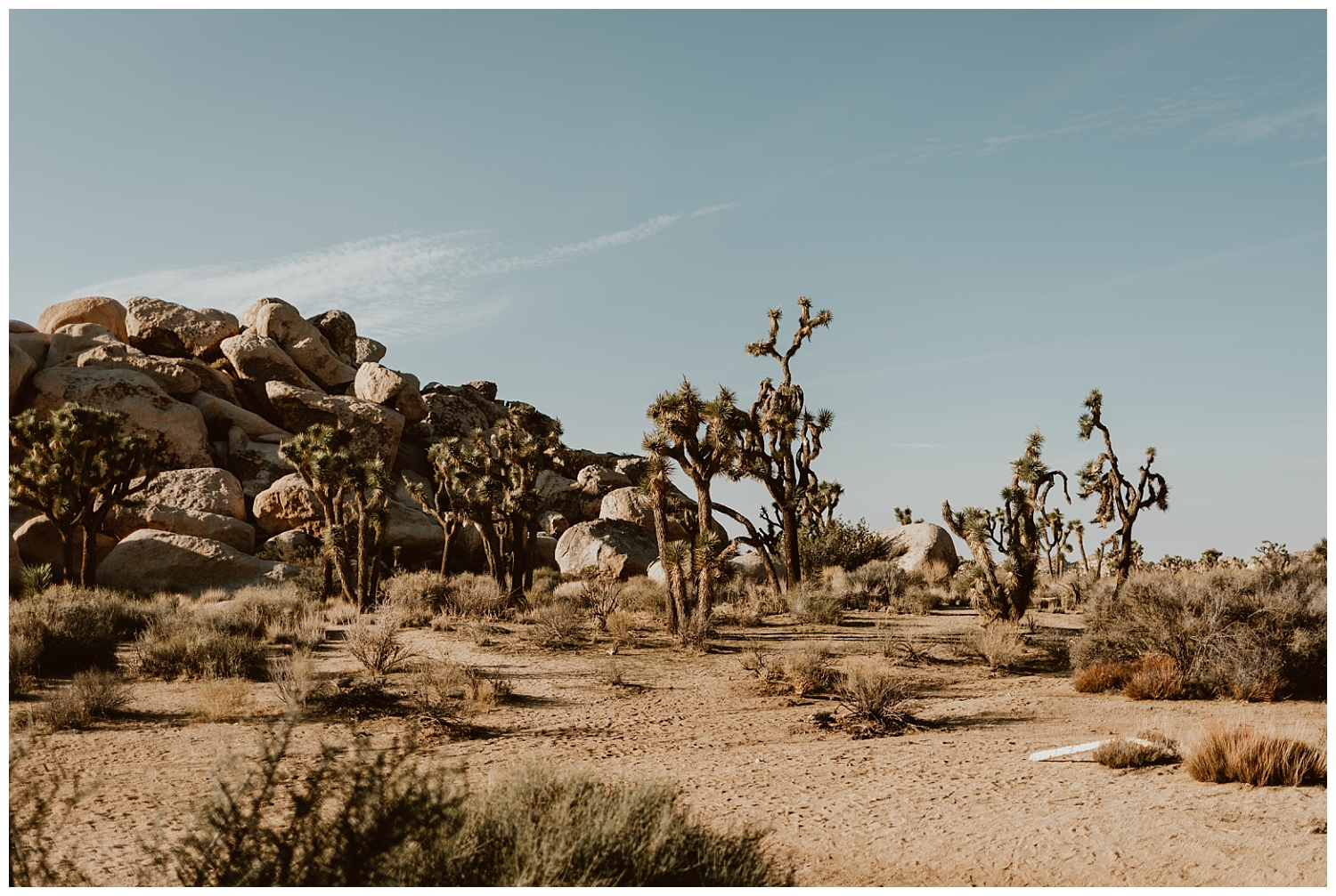 Joshua Tree Engagement (2).jpg