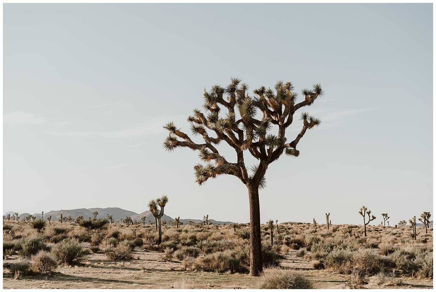 Joshua Tree Engagement (48).jpg
