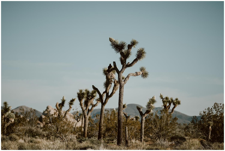 Joshua-Tree-Elopement-0027.jpg