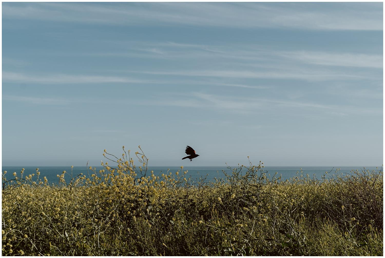 Leo-Carrillo-Beach-Engagement-0001.jpg