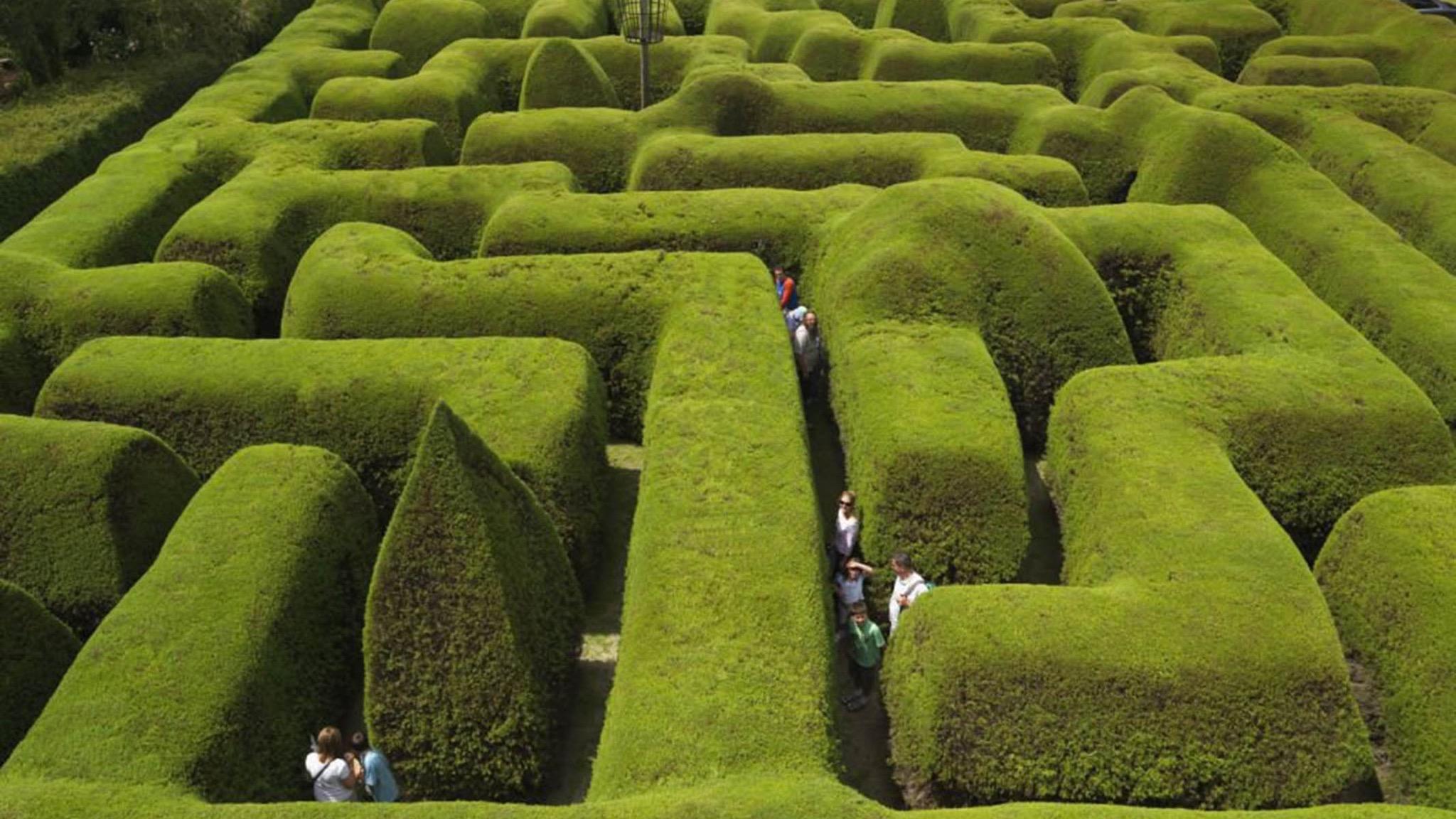 ashcombe-maze.jpeg
