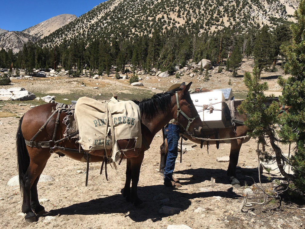 Mule delivering our food and meds- but no fuel.