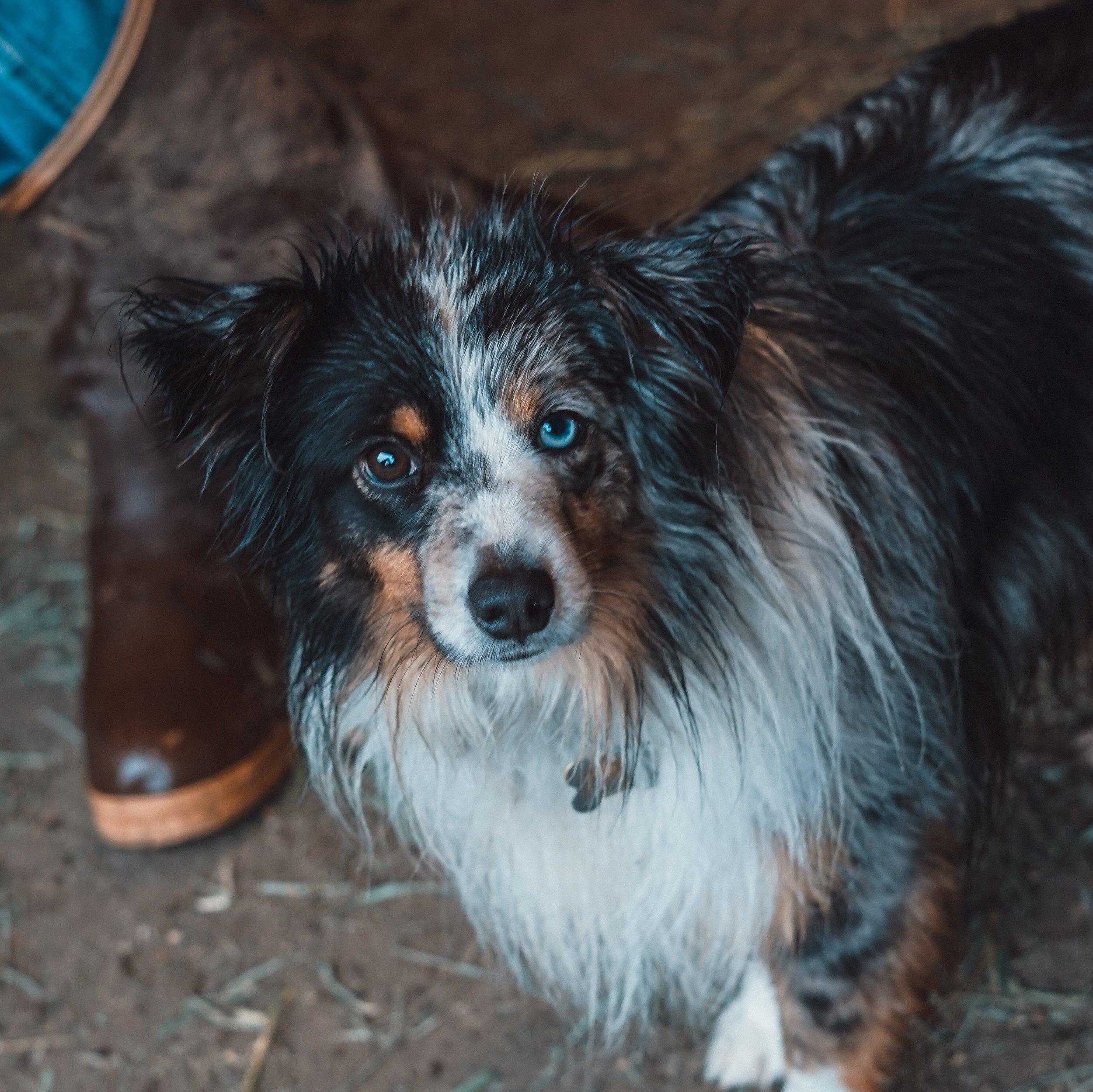 Dog DSC09470.jpg