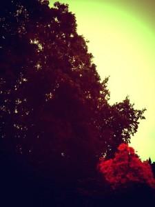 photo copy 2