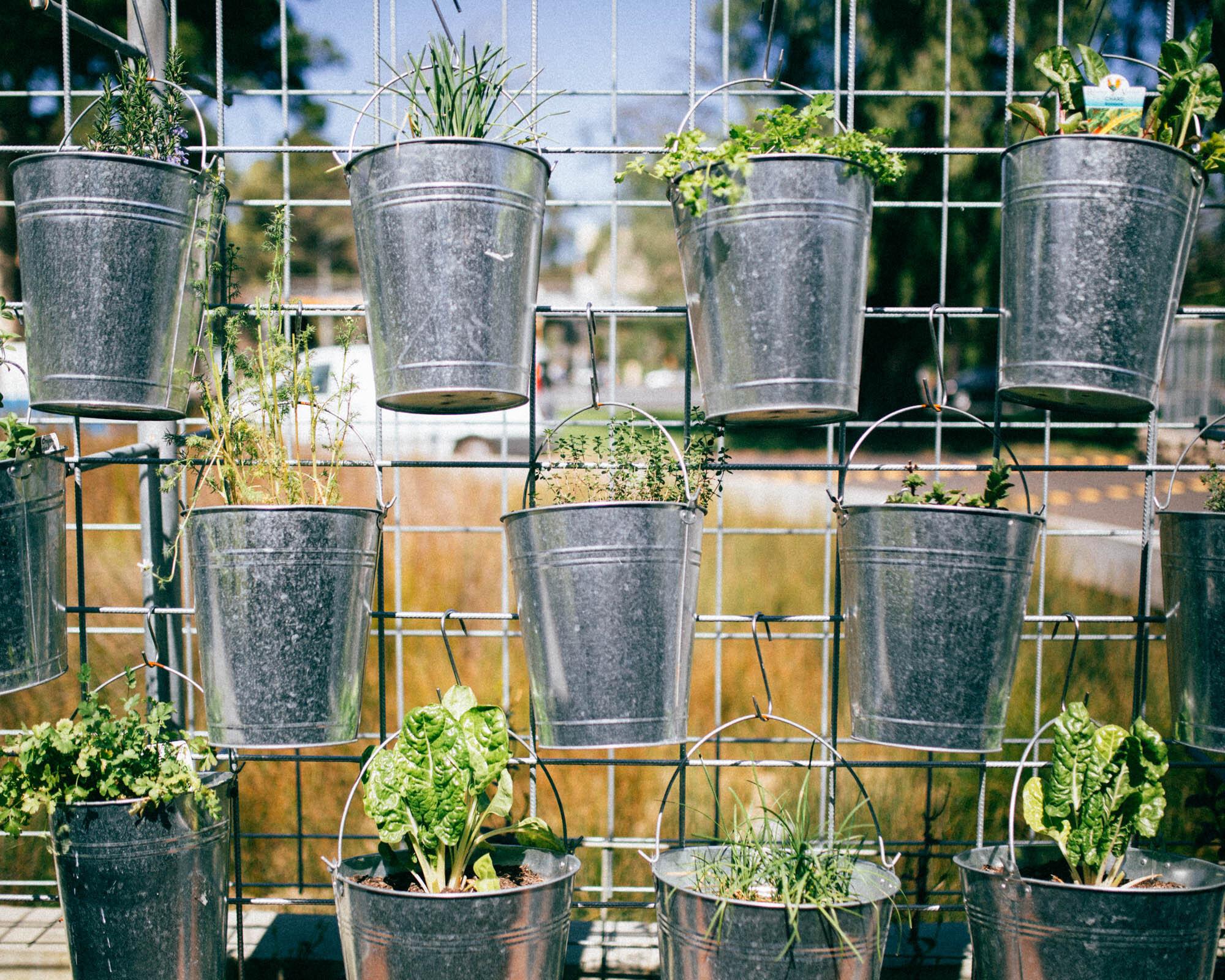 Community Herb Garden