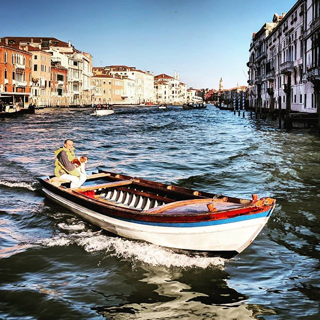 Just... ya know... chilling with my dog, taking a little drive. . . . #boatdog #venice🇮🇹 #boattransport #doyoutravel #letsgosomewhere #traveldeeper #triplookers #athomeintheworld #beautifuldestinations #roamtheplanet #adventurethatislife #lovetotravel #openmyworld #wonderfulplaces #goexplore #travelmore #doyoutravel #adventureseeker #wanderlust #seekmoments #momentsofmine #postcardsfromtheworld #photographyislifee #solotravel