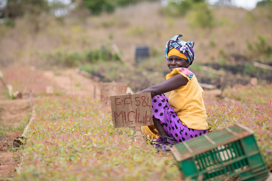 Get an early start at our Nursery, building data systems to manage millions of new seedlings