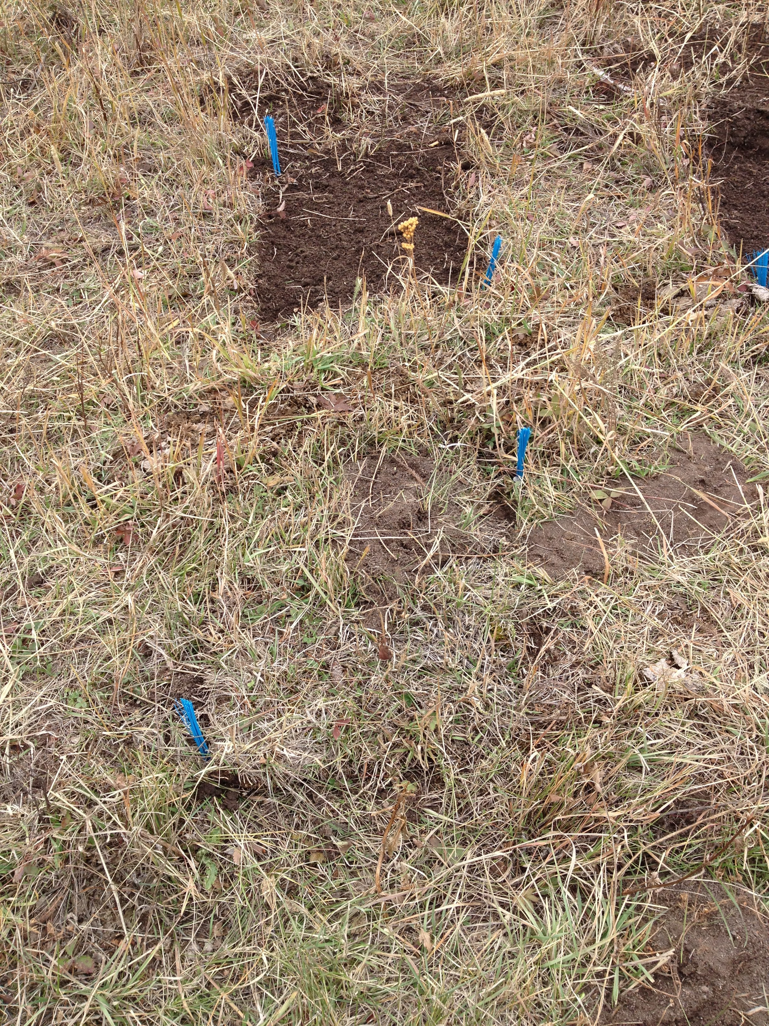 Open turf and transplant plots
