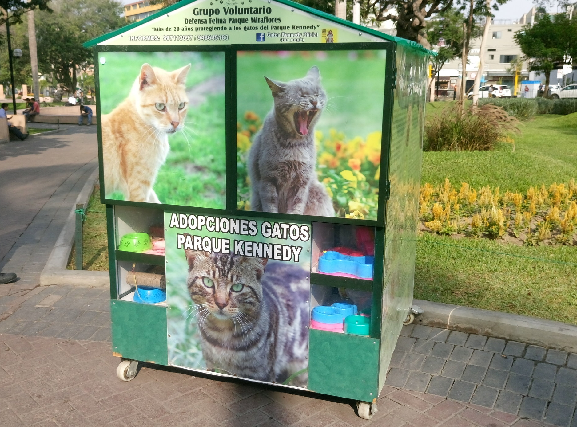 Cat adoption booth in Lima's Kennedy Park
