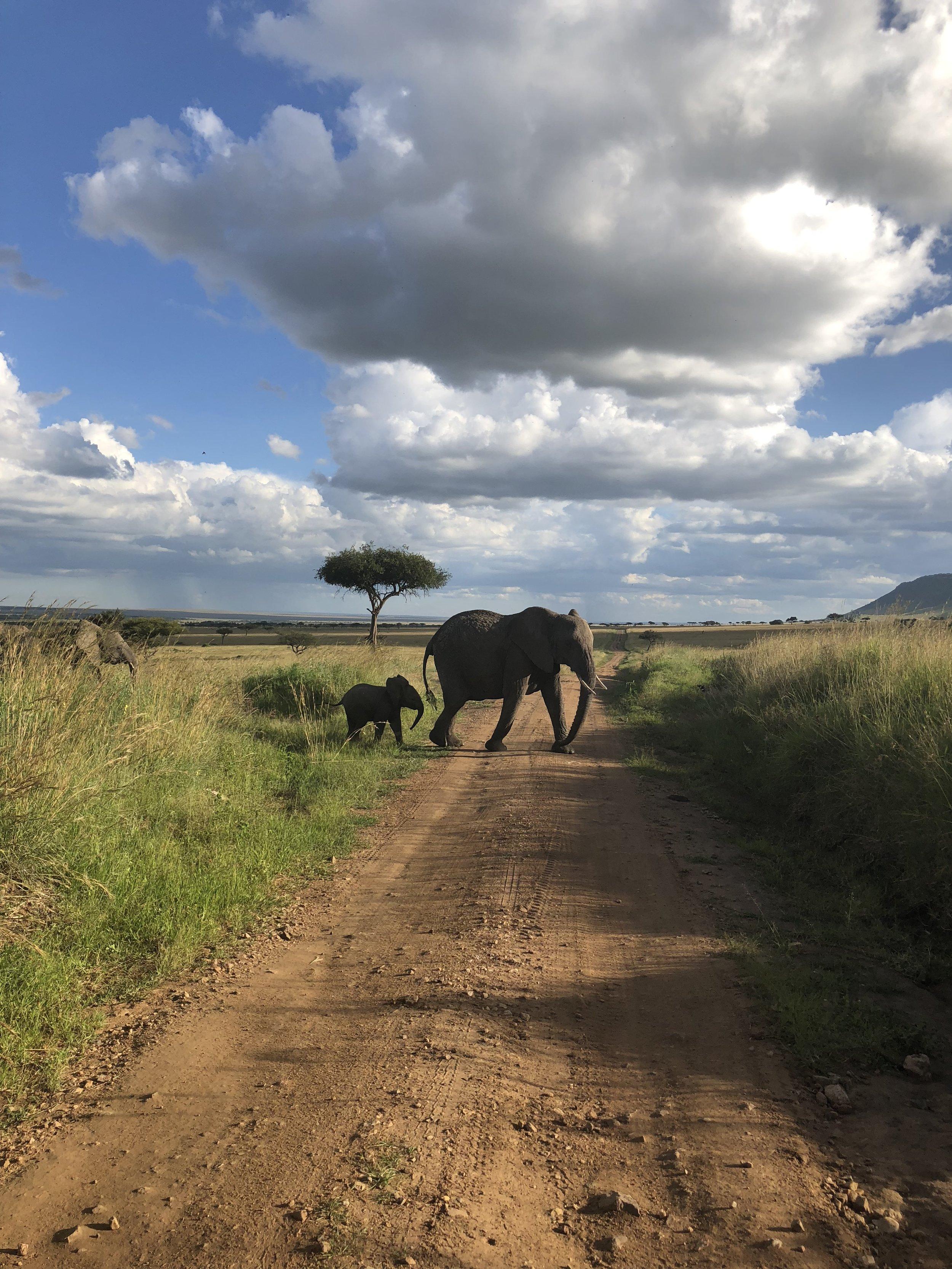 tifdot kenya elephants.jpg