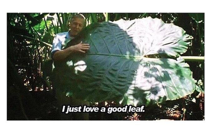 tifdot big leaf.png