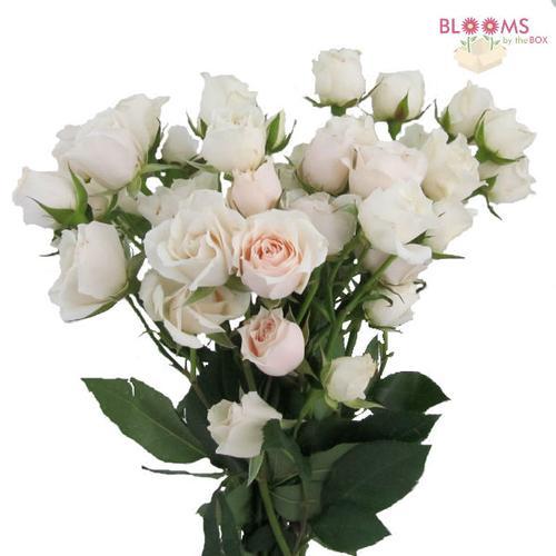 07792b__spray_rose_white_majolica.jpg