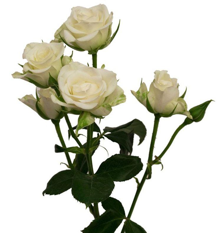 1d12d6149e187eea7e43b2862ed2a001--flower-types-flower-colors.jpg