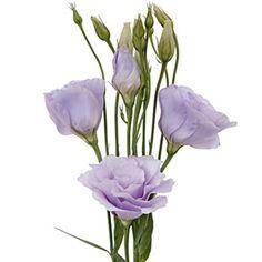 a3bd4dcbffb6ee3689b56eeb3a42019d--purple-wedding-flowers-lavender-flowers.jpg