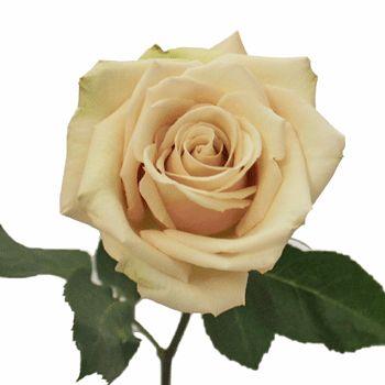 ddac0fb18074556dc2dacc88a64b4270--wedding-girl-cream-roses.jpg