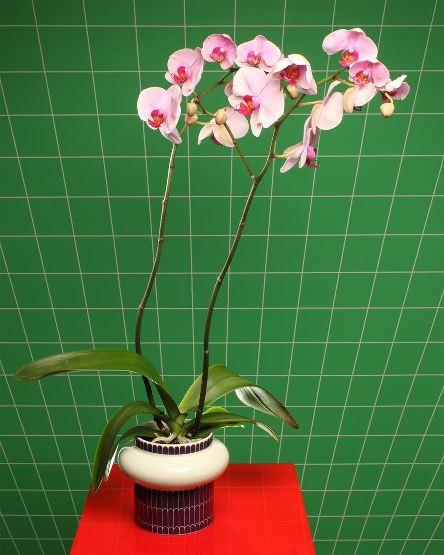 "Orchid  3D Lenticular print 16x20"" / 40x50cm"
