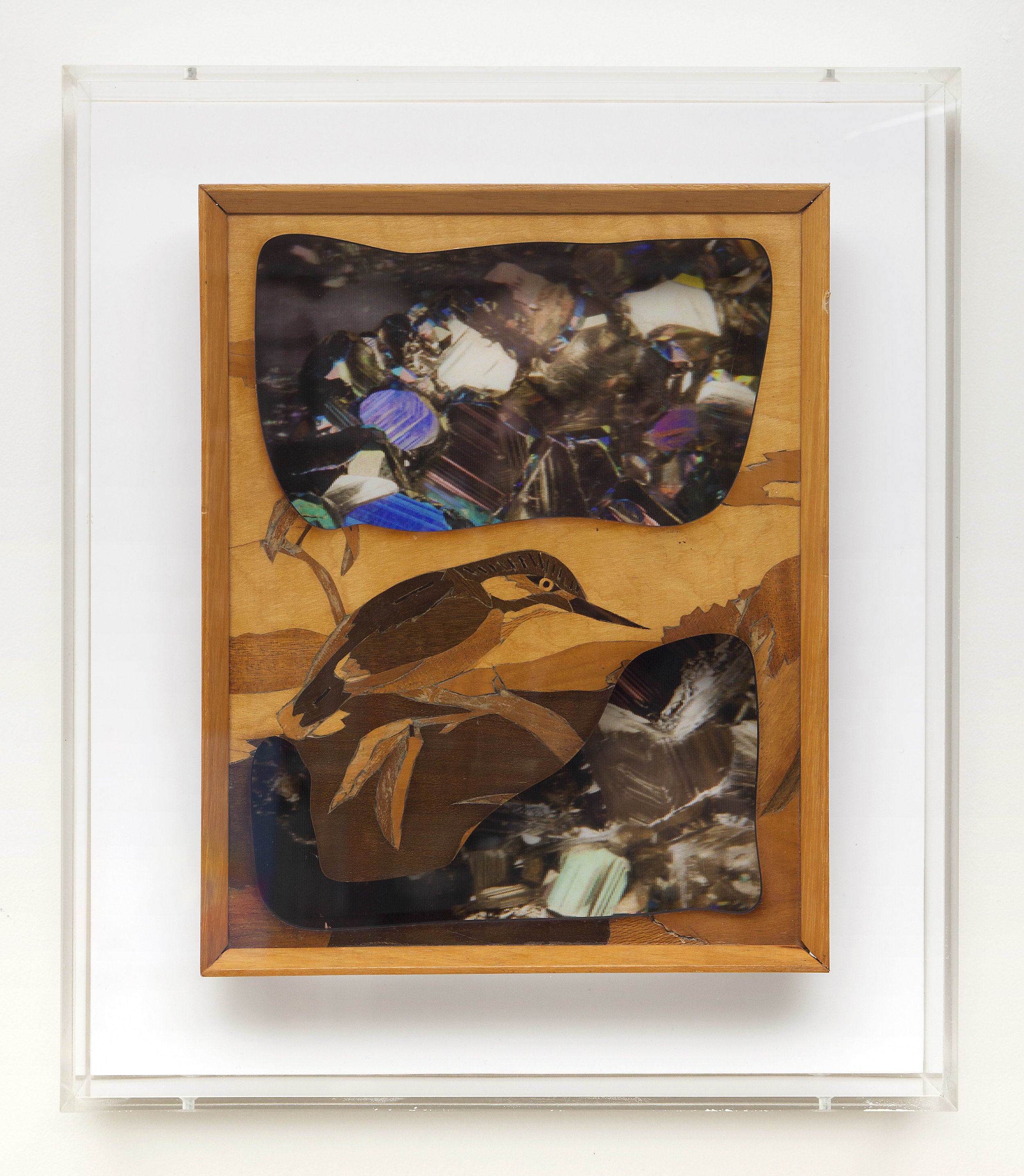 """The kingfisher's dream (in colour)  Laser-cut marquetry over 3D lenticulars in custom acrylic box. 12x14"""""""