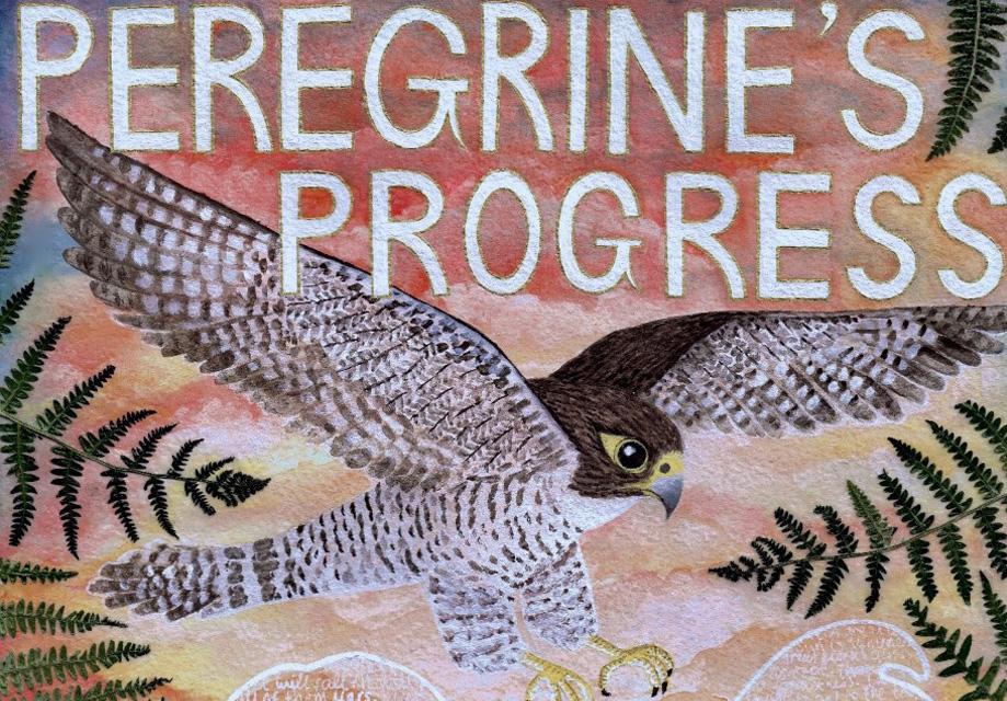 Peregrine's progress - image for website.jpg