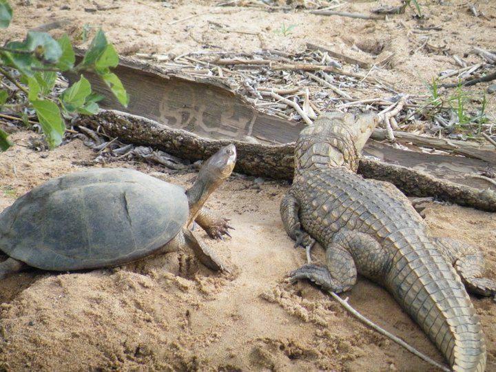 Crock & Tortoise.jpg