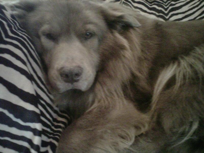 Her beloved dog, Rufus.