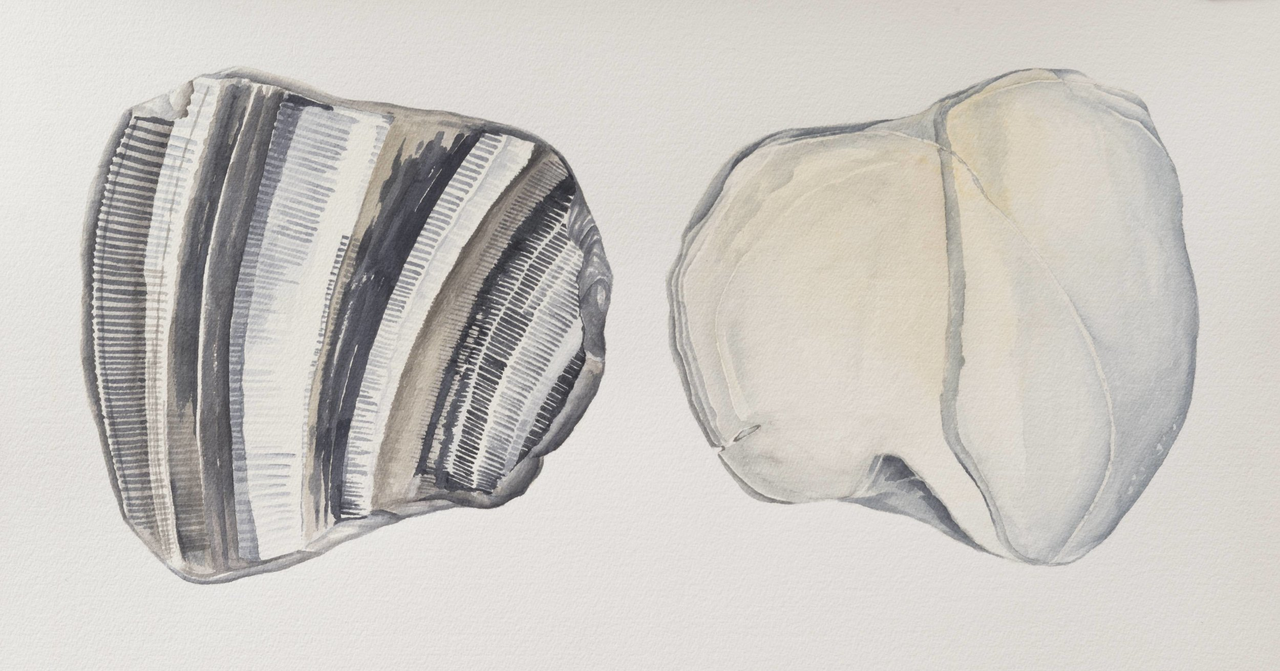 "Two Sides of the Same #3,   2004, watercolor & gouache on paper, 16 3/8"" x 30"""