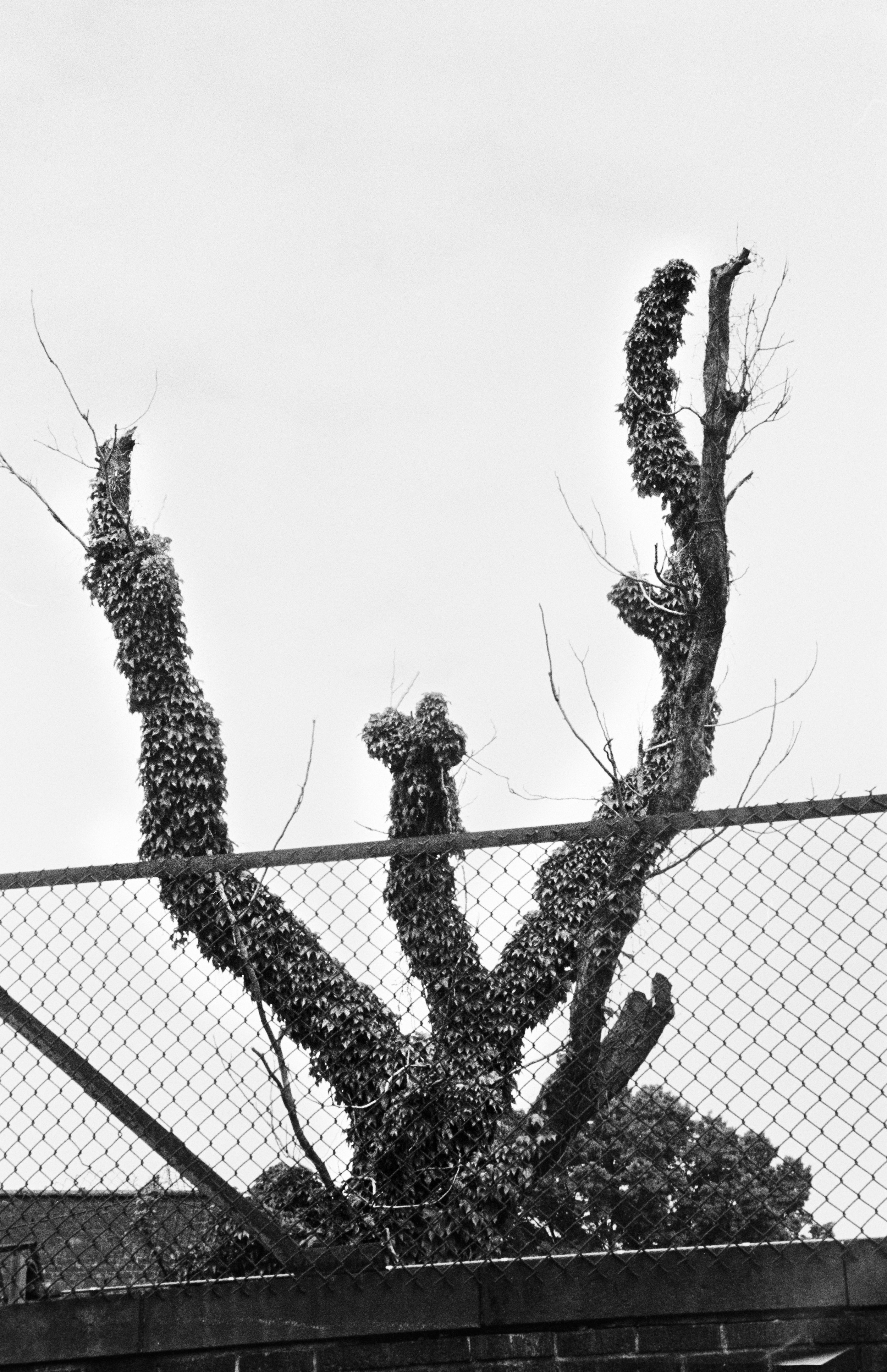 W TreeByWarriorsTunnel.jpg