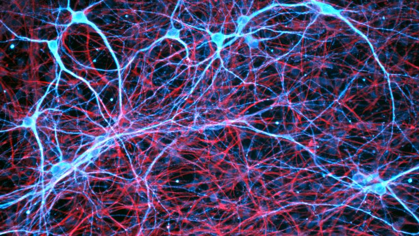 Scientists Can Now See How Brains Work in Real Time - A breakthrough technique helps shine new light on our gray matter.