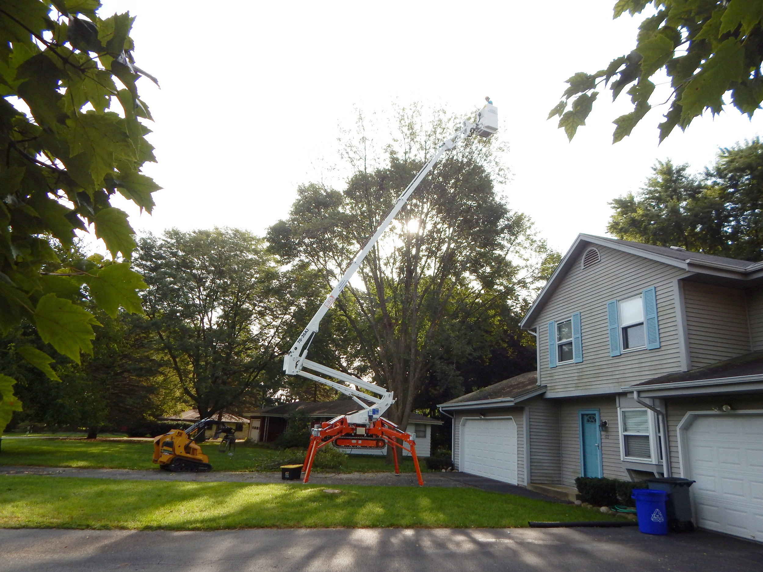 removal of tree due to emerald ash borer
