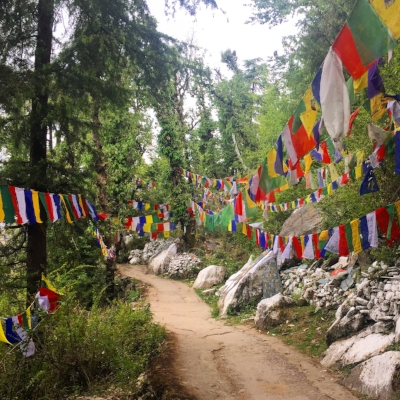 Through the woods in Dharamsala, India