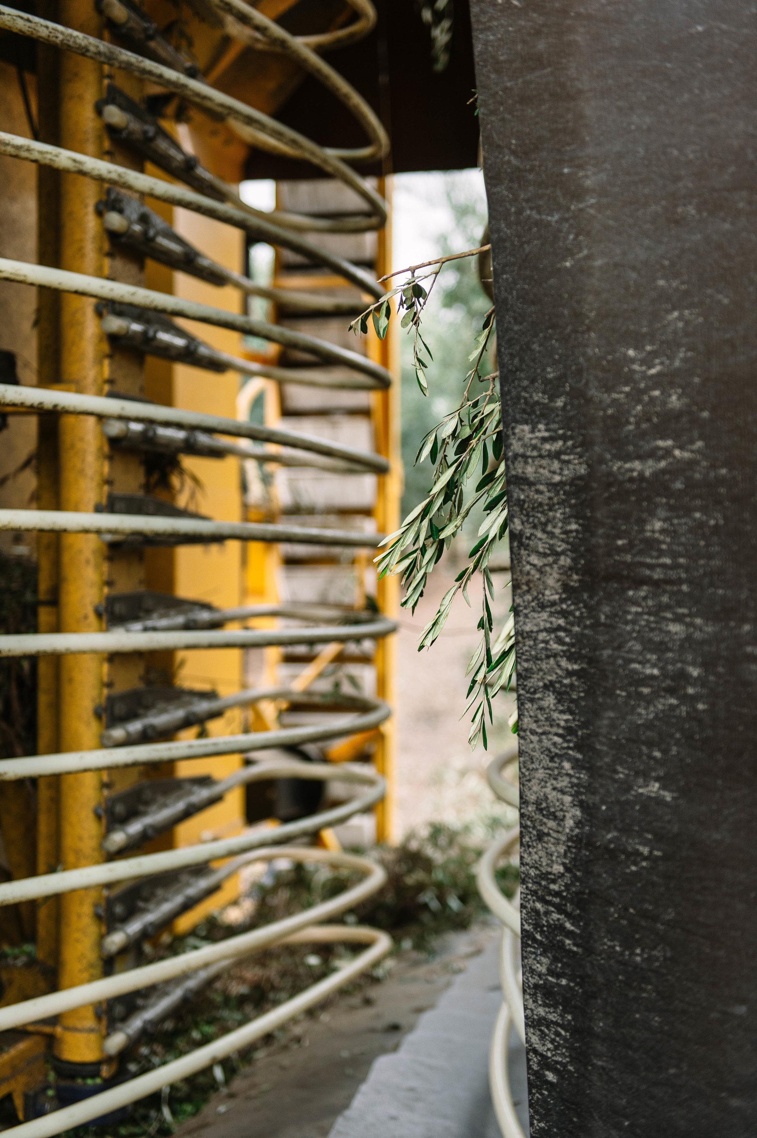 Olive harvesting equipment