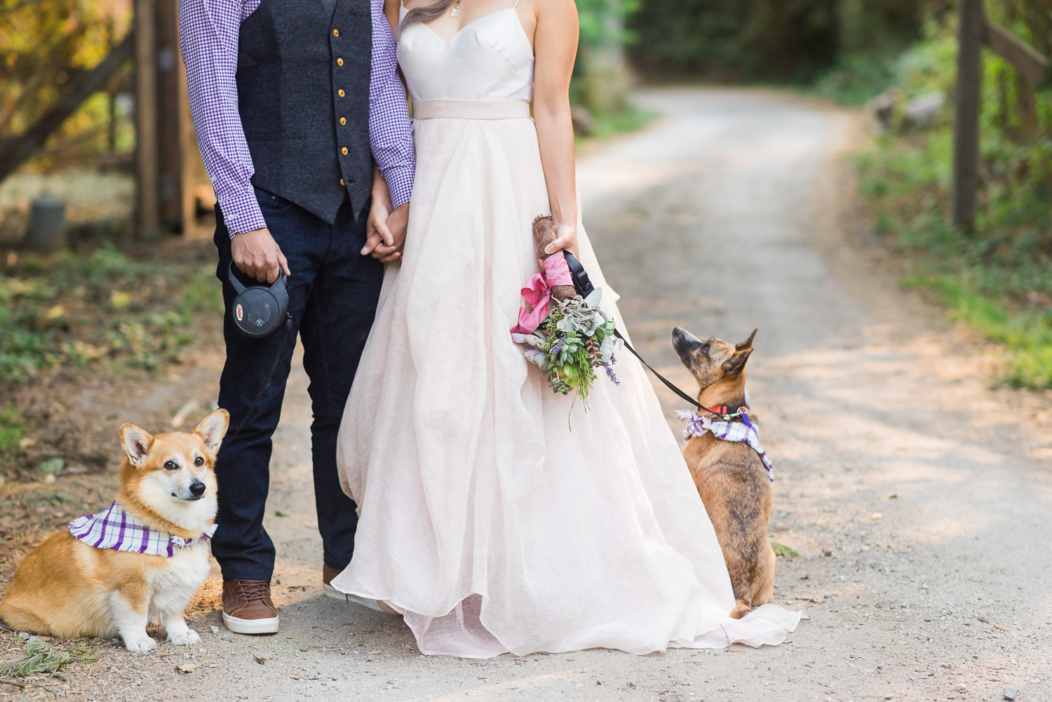 Bride and groom with their two dogs in the woods
