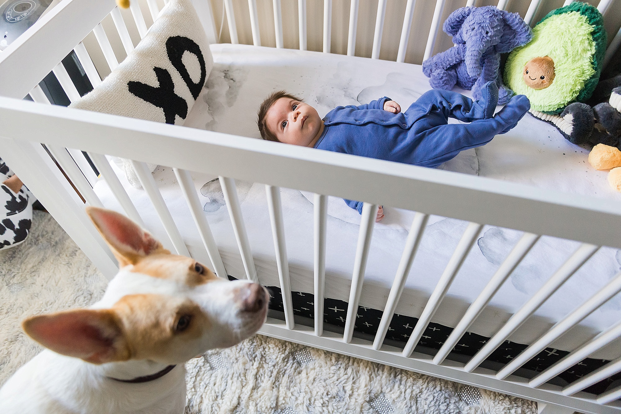 Dog look over a baby in crib