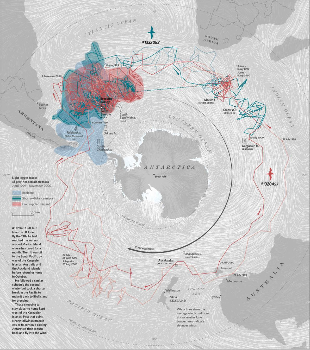 Map of Albatross Migration Route from the book  Where the Animals Go: Tracking Wildlife with Technology in 50 Maps and Graphics