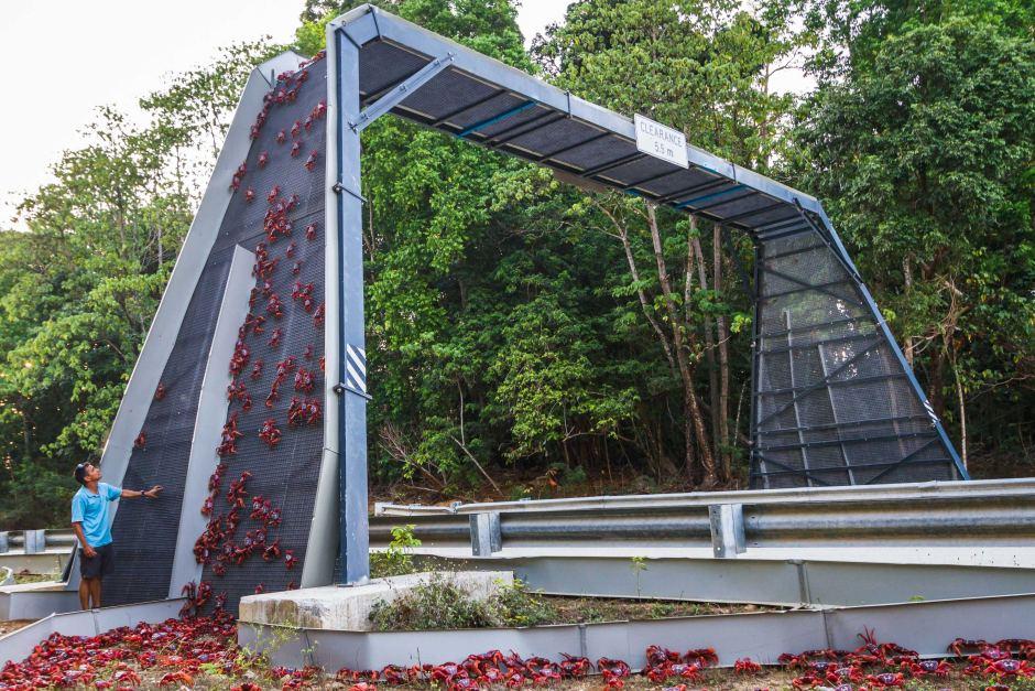 The Crab Bridge of Christmas Island